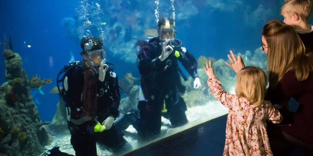 REVIEW The Deep – family fun at one of the UK's largest aquariums 01 1