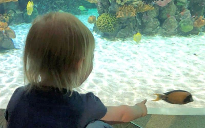 REVIEW The Deep – family fun at one of the UK's largest aquariums 03