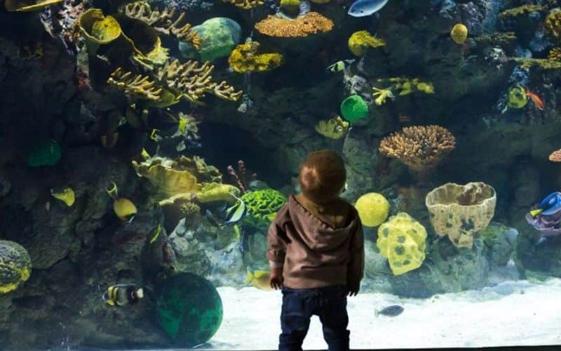 REVIEW The Deep – family fun at one of the UK's largest aquariums 05
