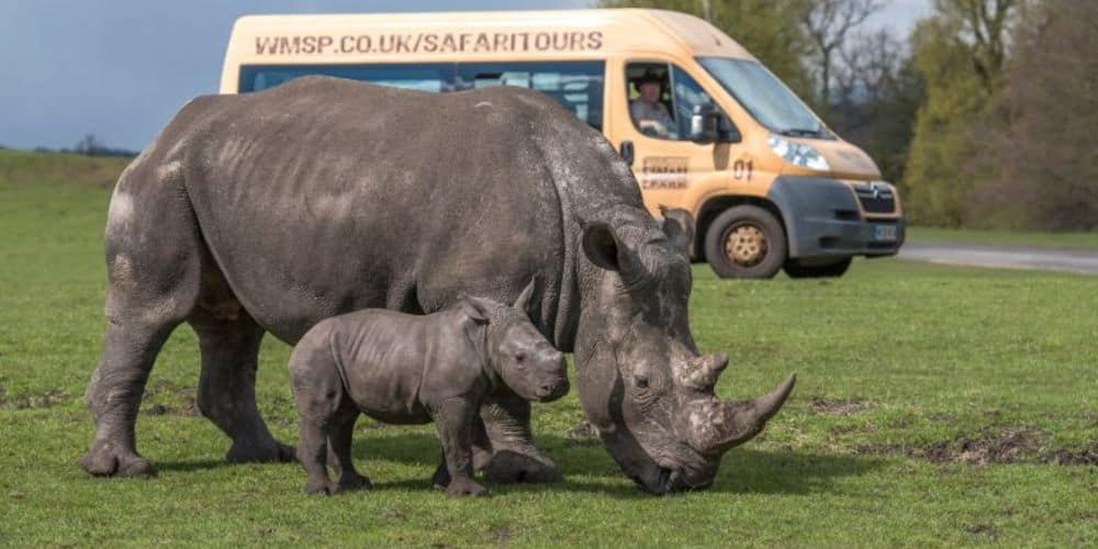 REVIEW : We Had A Roaring Time at West Midlands Safari Park
