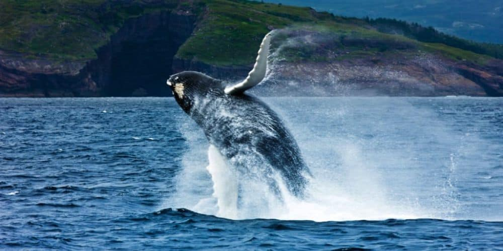 TRAVEL Whales Bergs Bars in St. John's – Canada 05