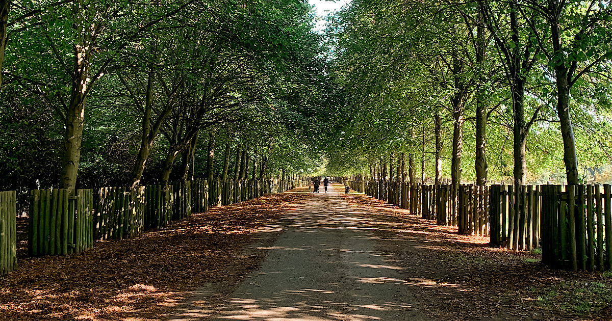 The Most Beautiful Autumnal Walks in Cheshire 25