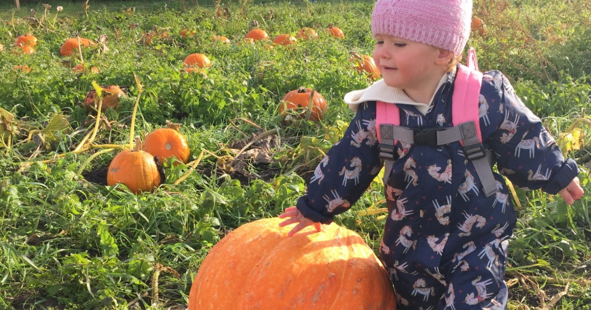Girl About Cheshire's Top 5 Pumpkin Patches 2020 18
