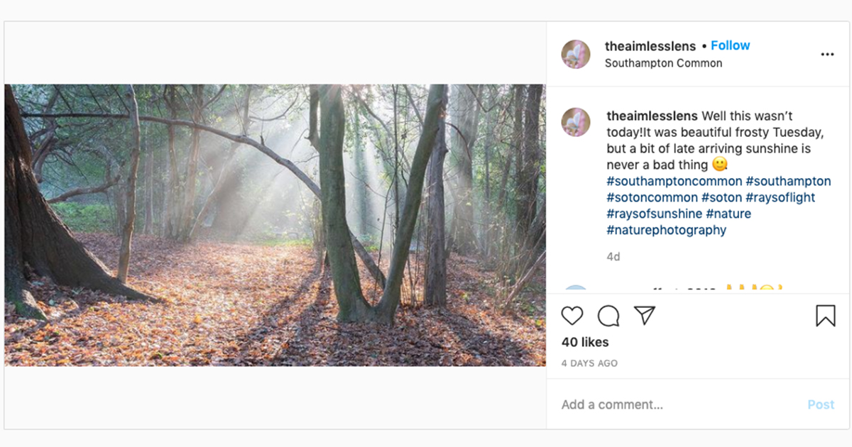 Instagram screenshot showing sun streaming through the trees on to fallen leaves