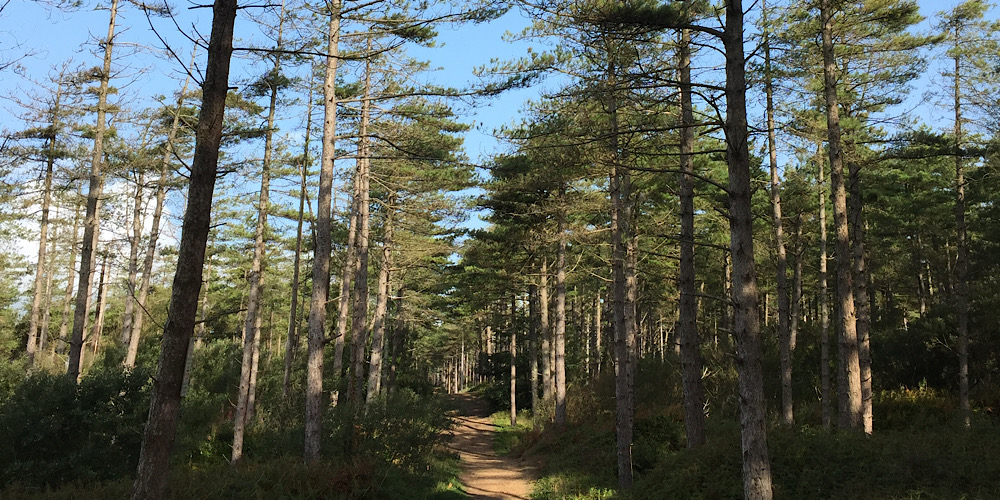 Anglesey Newborough Forest