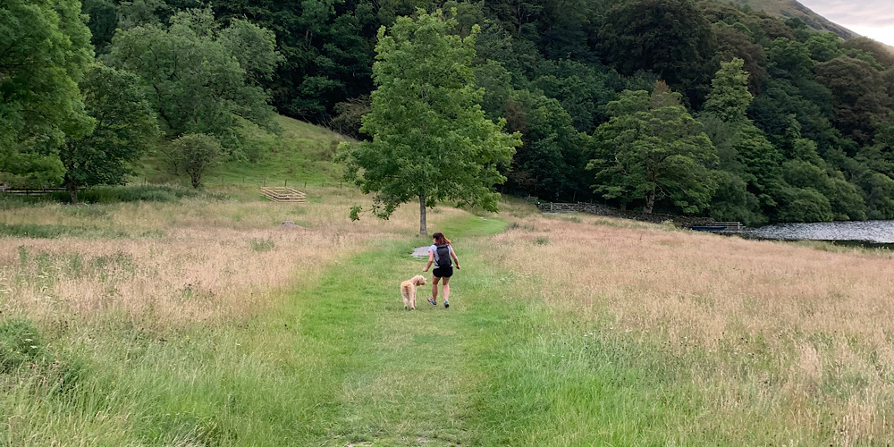 Wheelchair Accessible Walks in The Lake District The grassy paths on the way to loweswater in summer. Playing with the dog