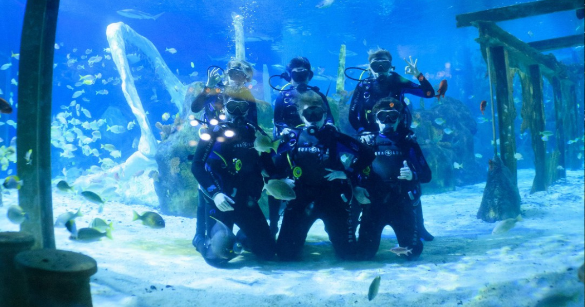 a group of divers in the shark tank at bear grylls adventure