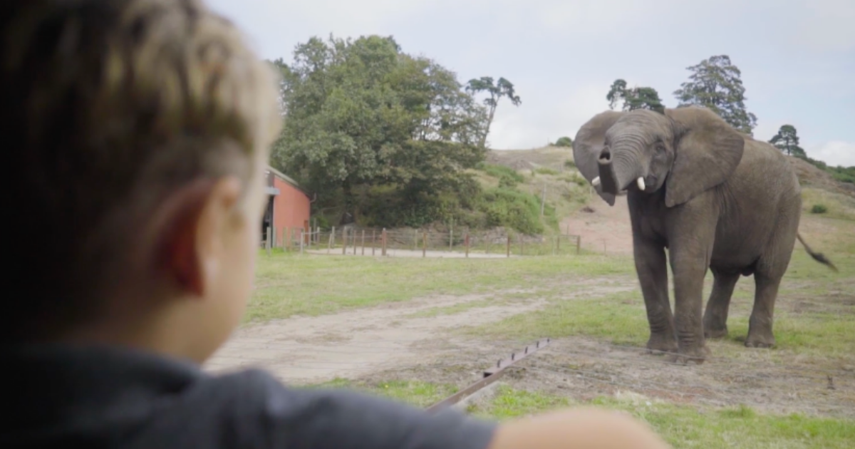 Boy looking at an elephant