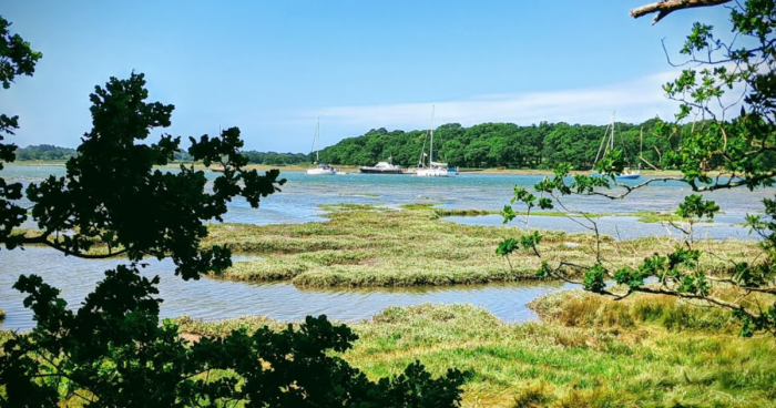 hampshire staycation near new forest